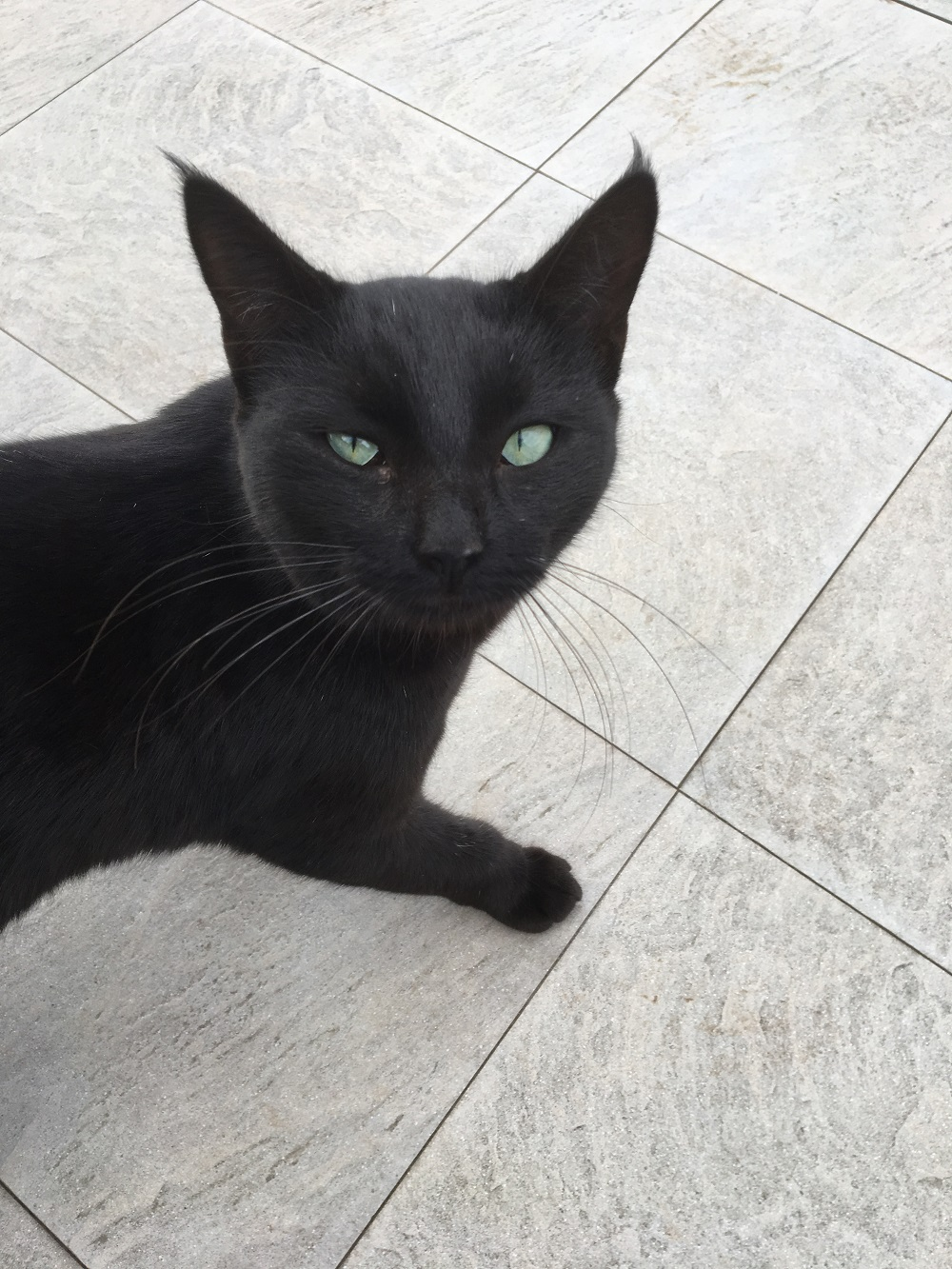 Die Reise nach La Palma - Teil 2 - schwarze Katze - Sunnyside-of-life